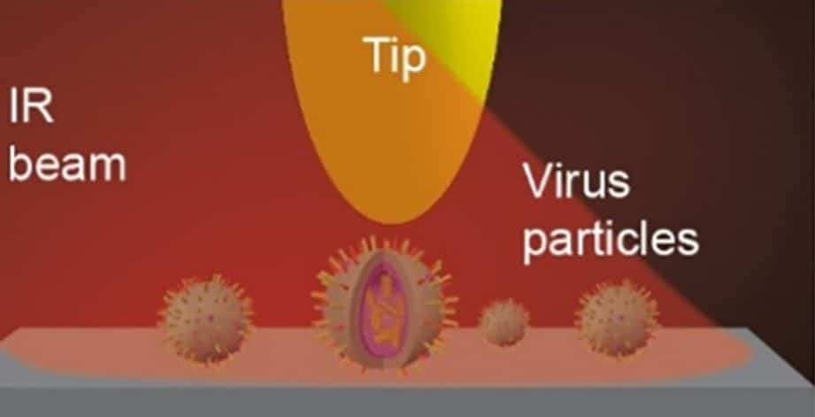 Probing individual viruses with nano-FTIR and IR nanoimaging