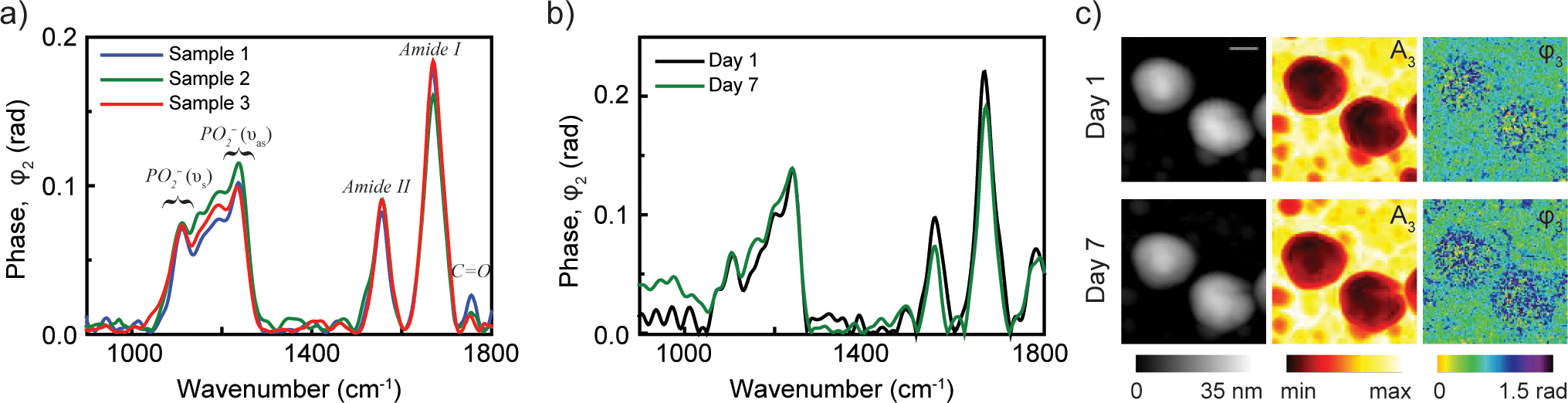 nano-FTIR spectra and IR nanoimages of an Influenza enveloped virus