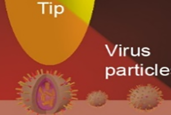 nano-FTIR reveals cell membrane penetration mechanism of enveloped virus e.g. COVID at nanoscale